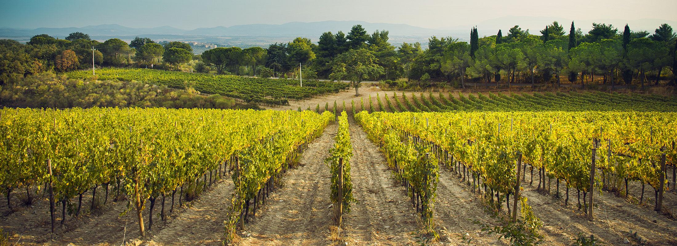 Fattoria-di-Magliano-vigne-Toscana
